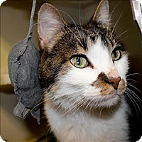 Adopt A Pet :: Murphy - Duluth, MN
