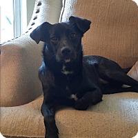 Adopt A Pet :: Jasmine - Fort Atkinson, WI