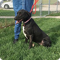 Adopt A Pet :: Lucy - Huntley, IL