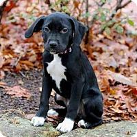 Adopt A Pet :: PRINCESS LILY - Salem, NH