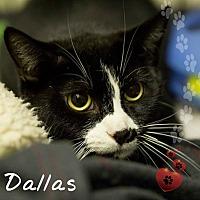 Adopt A Pet :: Dallas - Germantown, OH