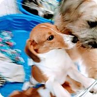 Adopt A Pet :: Sara East Colonial Petco - Orlando, FL