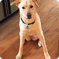 Adopt A Pet :: Bailey III - BIRMINGHAM, AL