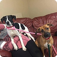 Adopt A Pet :: Oink and Moo - Lisbon, OH