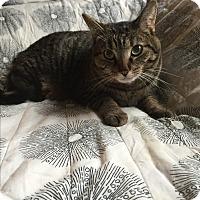 Adopt A Pet :: Payton - Addison, IL