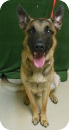 German Shepherd Dog Mix Dog for adoption in Gary, Indiana - Whisper