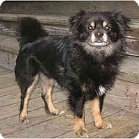 Adopt A Pet :: Boonedoggle - San Francisco, CA