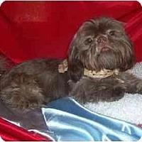 Adopt A Pet :: Frodo - Mooy, AL
