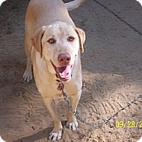 Adopt A Pet :: Angel - Hayden, ID