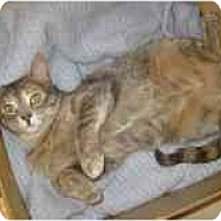 Adopt A Pet :: Cindy - Markham, ON