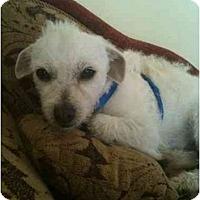 Adopt A Pet :: Pierre - Los Angeles, CA