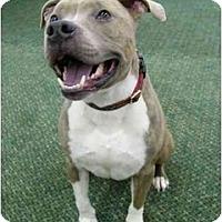 Adopt A Pet :: Roman - Video! - Mocksville, NC