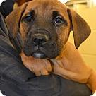 Adopt A Pet :: Chauncey