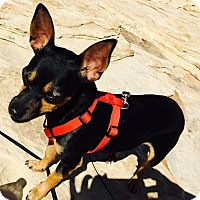 Adopt A Pet :: Maximus - Las Vegas, NV