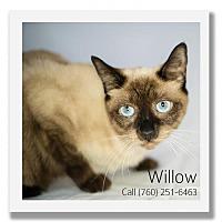 Adopt A Pet :: Willow - Palm Desert, CA