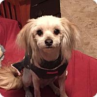 Adopt A Pet :: Daisy - Sweet & Sensitive - Bend, OR