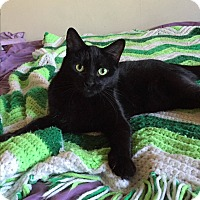Adopt A Pet :: Annabelle - Richmond, VA