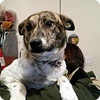 Adopt A Pet :: GABBIE - Pena Blanca, NM