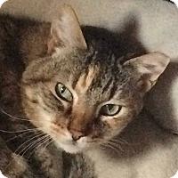Adopt A Pet :: Addison - Ogden, UT