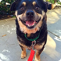 Adopt A Pet :: Crackers - Mission Viejo, CA