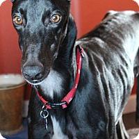Adopt A Pet :: Vinny - Tucson, AZ