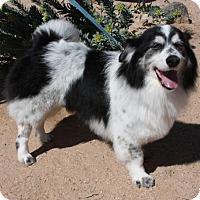 Adopt A Pet :: Cheeto - Tucson, AZ