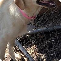 Adopt A Pet :: Ethel LGD - Kyle, TX