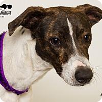 Adopt A Pet :: Rudy - Baton Rouge, LA