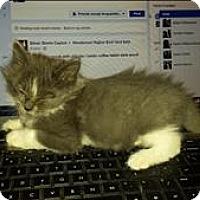 Adopt A Pet :: Dipper - Sherwood, OR