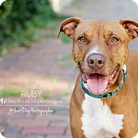 Pit Bull Terrier Mix Dog for adoption in Newport, Kentucky - Ruby