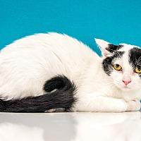 Adopt A Pet :: Lizzy - Chandler, AZ