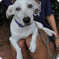 Adopt A Pet :: Julianne - Atlanta, GA