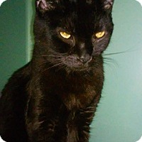 Adopt A Pet :: Angel - Franklin, NH