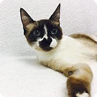 Adopt A Pet :: Tessa - Mission Viejo, CA