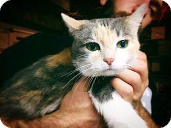 Calico Cat for adoption in Cincinnati, Ohio - Tawney