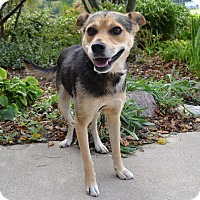 Adopt A Pet :: Walter - Michigan City, IN