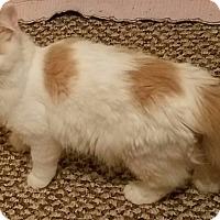 Adopt A Pet :: James - Charlotte, NC