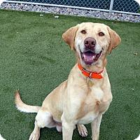Adopt A Pet :: Prince - Towson, MD