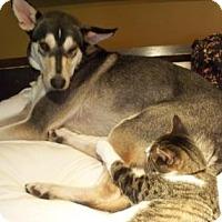 Adopt A Pet :: Jakkson - Blackstock, ON