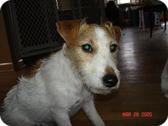 Jack Russell Terrier Dog for adoption in Omaha, Nebraska - Charlie