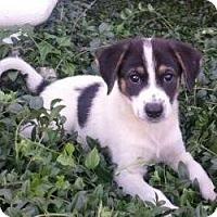 Adopt A Pet :: Sissy - Brattleboro, VT