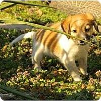 Adopt A Pet :: Desmond - Staunton, VA