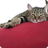 Adopt A Pet :: Annabelle - McDonough, GA