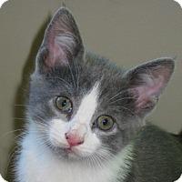 Adopt A Pet :: Tylli - Calgary, AB