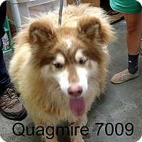 Adopt A Pet :: Quagmire - baltimore, MD