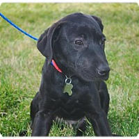Adopt A Pet :: New Caney - Broomfield, CO