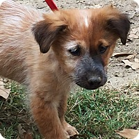Adopt A Pet :: Maple - Pewaukee, WI