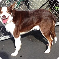 Adopt A Pet :: DASHER - San Pedro, CA