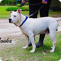 Adopt A Pet :: Tonka - Daleville, AL