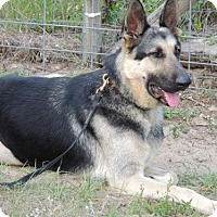Adopt A Pet :: Buster Brown - Citrus Springs, FL